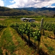 Osoyoos is right in the heart of Canada's Napa-like wine country