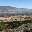 View of Osoyoos Lake and vineyards in the foreground